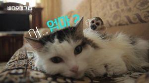 썸네일:'낳지 않아도 괜찮아'…새끼 원숭이 등에 태운 고양이