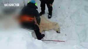총에 맞은 북극곰…북극 방문객 증가에 밀렵 성행