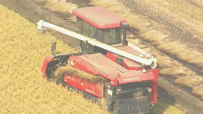 기사 대표 이미지:무거울수록 안 팔리는 쌀…소포장·즉석밥 매출은 늘어