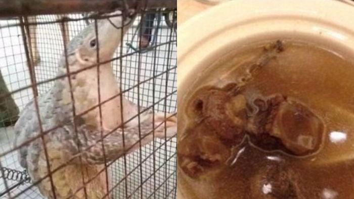 기사 대표 이미지:[뉴스pick] 멸종위기종 천산갑 요리 SNS에 자랑한 中 여성…공안에 검거