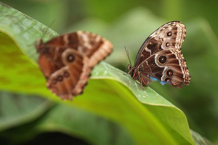 나비 (사진=게티이미지/이매진스)