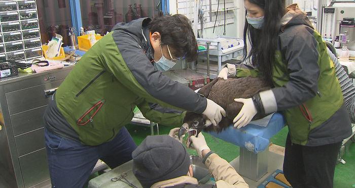 독수리의 억울한 죽음