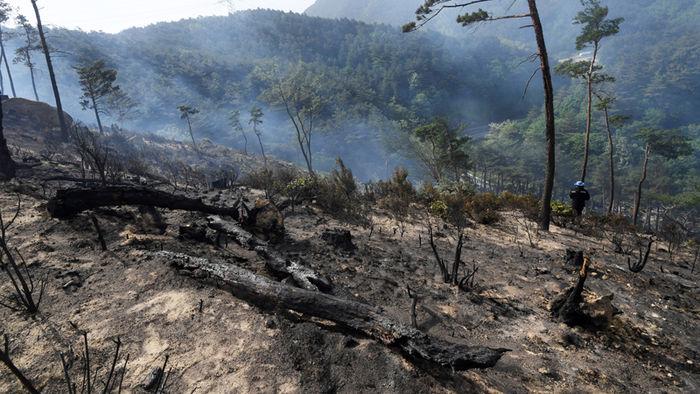 산불로 훼손된 숲