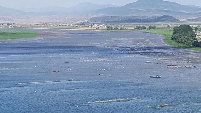 신의주 쪽 압록강에서 실뱀장어 잡는 북한 어선들