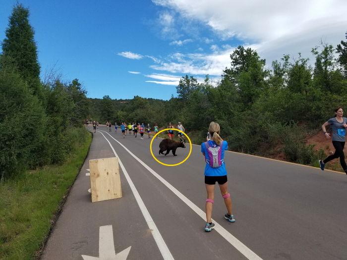 마라톤 대회에 거대한 흑곰이?…불청객 등장에 '깜짝'