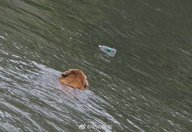[뉴스pick] 헤엄쳐서 강을 청소하는 개…아무도 시킨 적이 없다?(사진 = 상하이스트)