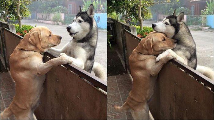 개들의 감동적인 우정, 만나서 서로 포옹하며 고마운 마음을 나눈다.