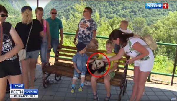 새끼 판다처럼 보이게 차우차우를 염색해서 관광상품으로 이용한 러시아 사람