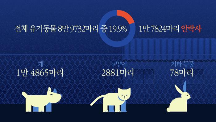 *그래픽 전체 유기동물 8만 9732마리 중 1만 7824마리 안락사(19.9%) 개 1만 4865마리 고양이 2881마리 기타 동물 78마리