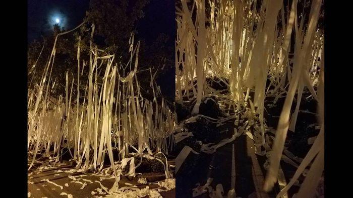 [뉴스pick] 하룻밤 사이에 학교 전체가 휴지로 뒤덮인 학교…알고 보니(사진 = 트위터 Linda Stouffer, Astrid Martinez)