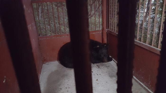 [취재파일] 반달곰을 또 다시 시험할 권리가 누구에게 있는가?