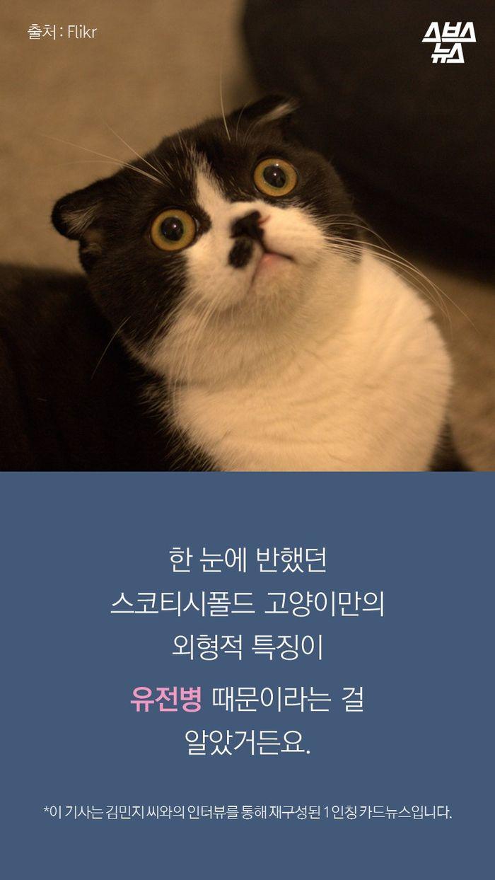 관련 사진한 눈에 반했던 스코티시폴드 고양이만의 외형적 특징이 유전병 때문이라는 걸 알았거든요.  *이 기사는 김민지 씨와의 인터뷰를 통해 재구성된 1인칭 카드뉴스입니다.