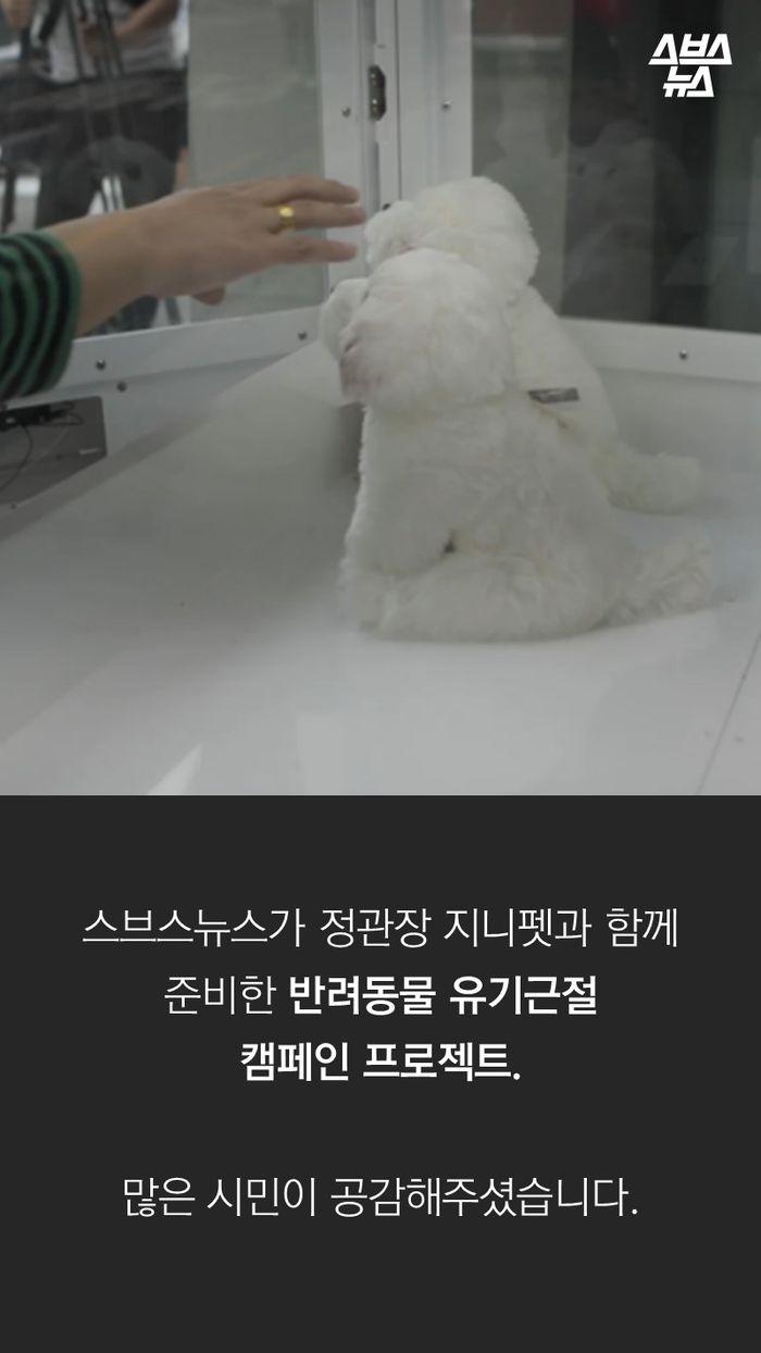 스브스뉴스가 정관장 지니펫과 함께 준비한 반려동물 유기근절  캠페인 프로젝트.  많은 시민이 공감해주셨습니다.
