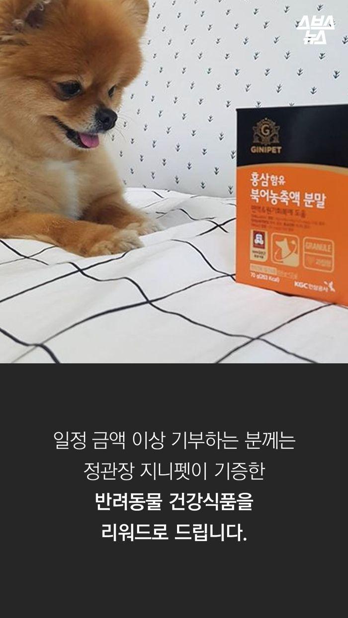 일정 금액 이상 기부하는 분께는  정관장 지니펫이 기증한  반려동물 건강식품을  리워드로 드립니다.
