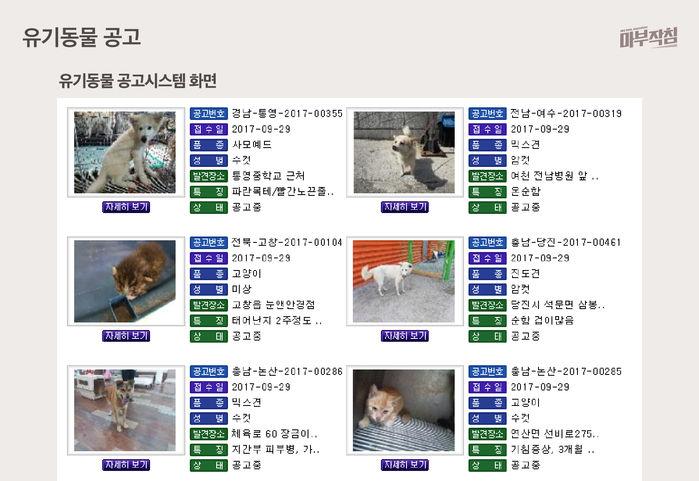 [마부작침] 유기동물 그래프_유기동물 공고