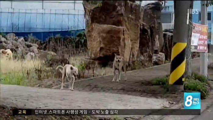 [뉴스pick] 추석 연휴 도로에 버려진 새끼 강아지들…'이렇게 귀여운데