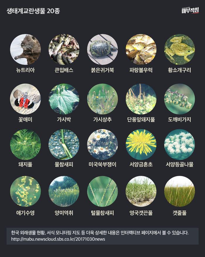 [마부작침] 생태계교란생물 20종
