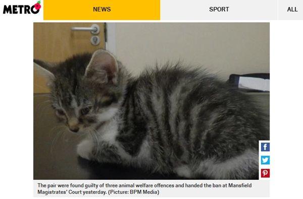 아픈 고양이에게 사람 약 사용했다 법정 간 커플