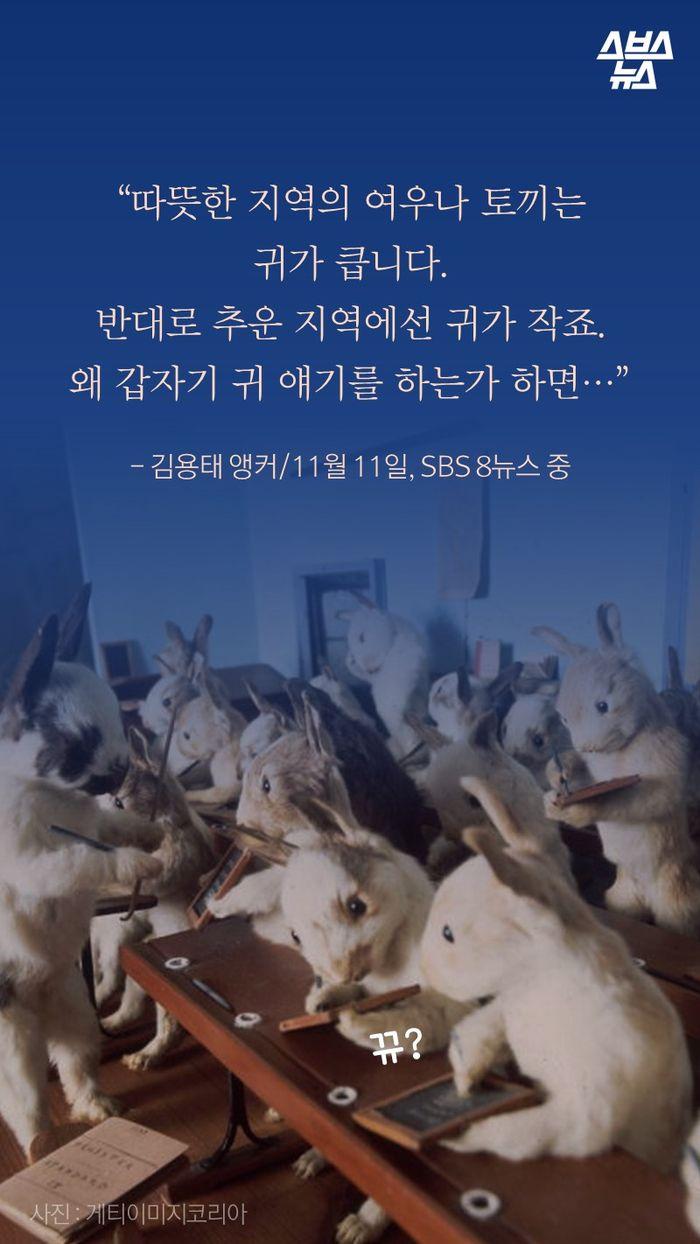 """""""따뜻한 지역의 여우나 토끼는 귀가 큽니다. 반대로 추운 지역에선 귀가 작죠. 왜 갑자기 귀 얘기를 하는가 하면…""""   - 김용태 앵커/11월 11일, SBS 8뉴스 중"""