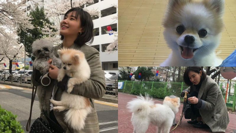 기사 대표 이미지:[SBS Star] Yuri Bids Goodbye to Her Dog Hani