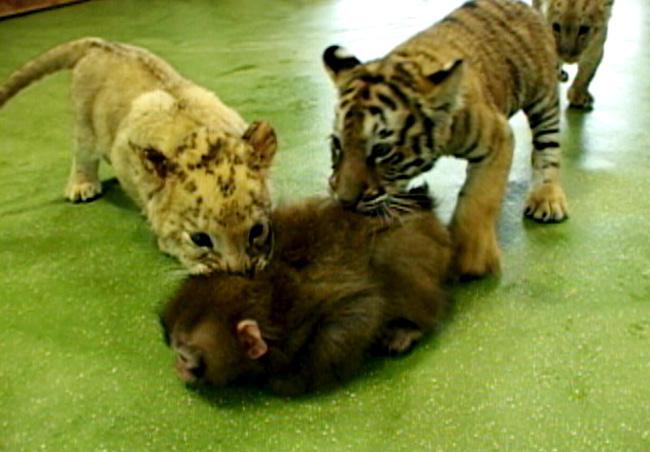 小动物间的战斗