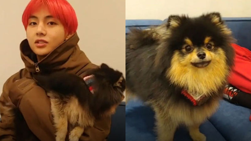 기사 대표 이미지:[SBS Star] BTS V Gets Interrupted During a Live Broadcast by His Dog