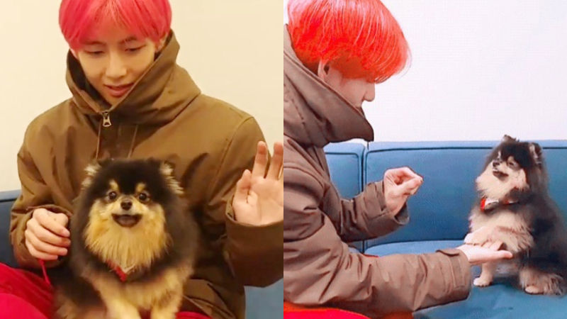 기사 대표 이미지:[SBS Star] BTS V Shows What a Responsible and Caring Dog Adopter He Is