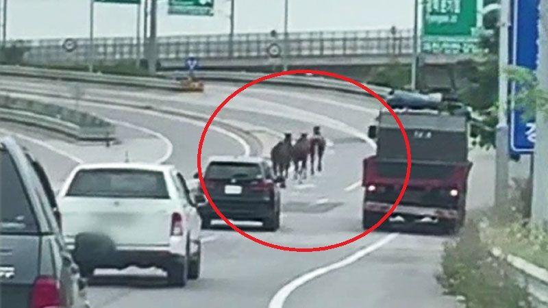고속도로 위 달리는 말