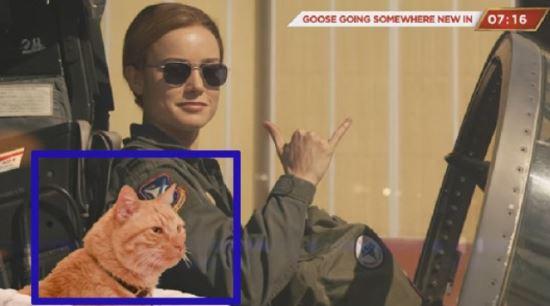[시네마Y] '캡틴 마블' 구스의 비밀…4마리의 고양이가 연기