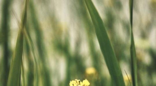 코로나19 이후 첫 시상식…들꽃영화상, 소박하지만 따뜻하게